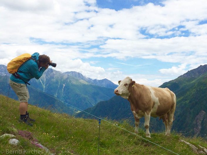 Fotograf mit Kuh