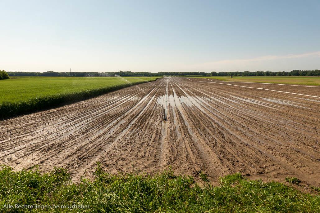 Marchfeld Bewässerung